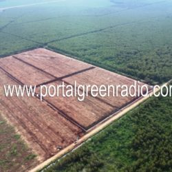 RTRW urung disahkan, Yayasan Hutanriau: ada kepentingan yang belum terakomodir