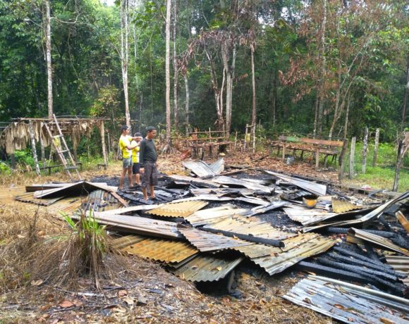Grief of Sumatran Tiger, Illegal Logger Burnt the Community Forest's Hut